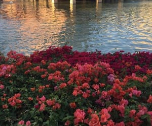 flowers, red, and water image