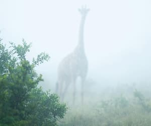 giraffe, green, and world image
