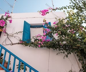 aesthetic, flower, and Greece image
