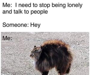 meme, funny, and lonely image