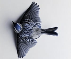 aesthetic, bird, and inkheart image