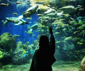 aquarium, california, and happy image