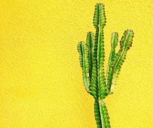 cactus and yellow image