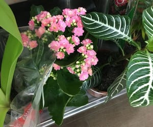 flores, plants, and flowers image