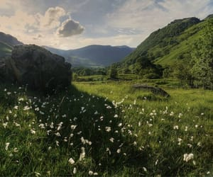 nature, green, and flowers image