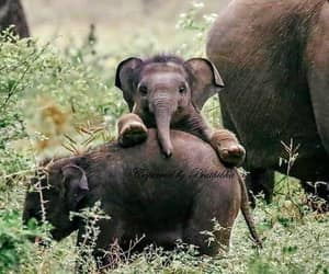 baby, elephant, and nature image