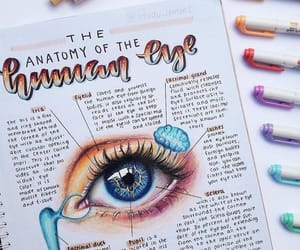 anatomy and study image