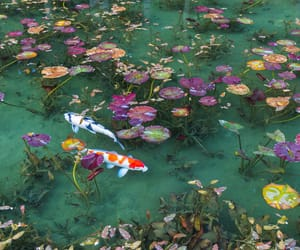 nature, fish, and aesthetic image