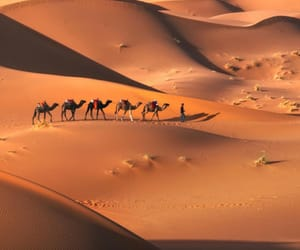 camel and nature image