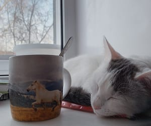 cacao, cat, and cats image