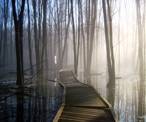 bridge, forest, and water image