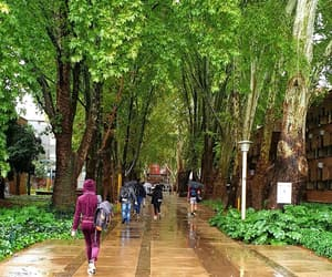 college, rain, and south africa image