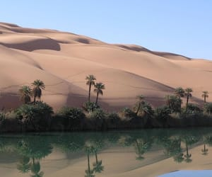 desert, nature, and tropical image