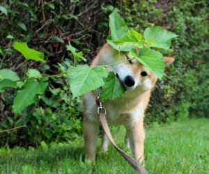 aesthetic, dog, and green image