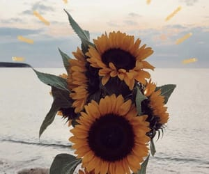 beach, beautiful, and bouquet image