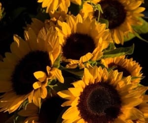 beautiful, bouquet, and sunflowers image