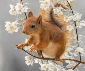 squirrels, animals, and naturaleza image