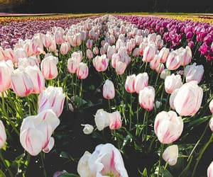 flowers, tulipanes, and flores image