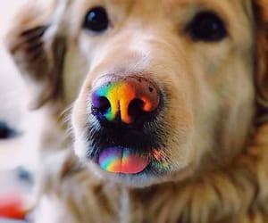 dog, cute, and rainbow image