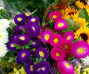 bunches, colors, and flora image