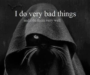 animal, cats, and do bad things image