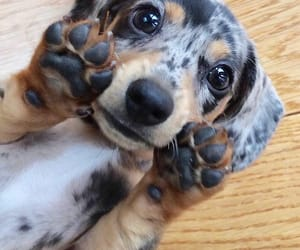 puppy, adorable, and dog image
