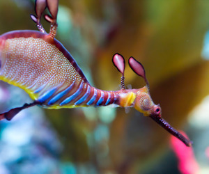 beautiful, animal, and colors image