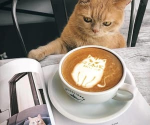 animals, coffee, and morning image