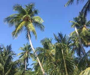 blue, coconut, and green image