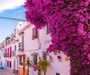 city, flowers, and architecture image
