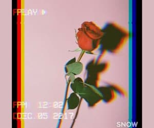 aesthetics, rose, and filters image