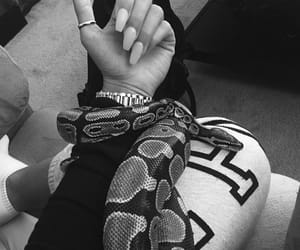 animal, black and white, and nails image