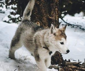facebook, loki the wolfdog, and nature image