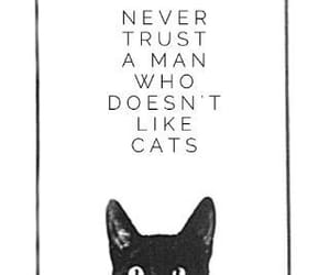 cat, statement, and random quote image