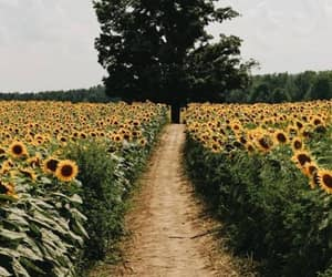 flowers, sunflowers, and landscape image