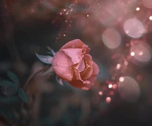 bokeh, flower, and photo image