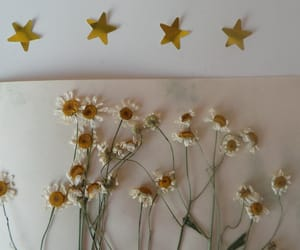 flowers, pale, and stars image