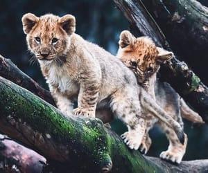 Animales, lindos, and ternura image