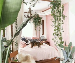 bedroom, cat, and plants image