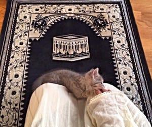 islam, cat, and muslim image