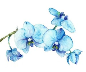 art, blue, and blue orchid image