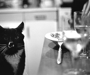 bw, cat, and film image