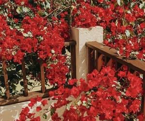aesthetics, flowers, and balcony image