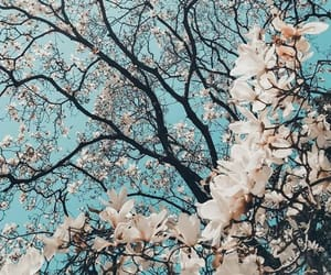 flowers, spring, and tree image