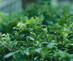 april, plants, and seasons image