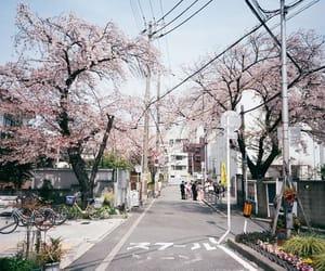 pink and sakura image