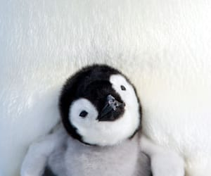 animals, penguin, and winter image