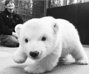 cute, Polar Bear, and animal image