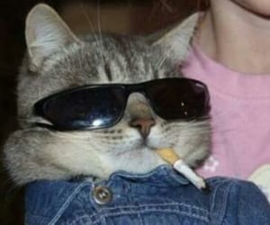 cat, funny, and cigarette image