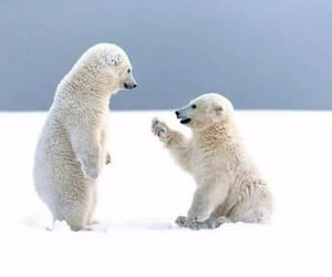 Animales, bear, and Polar Bear image